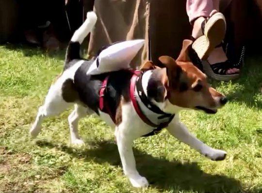 Freie Trauung in Mönchengladbach Ringtraeger Hund Kurt mit Ringkissen Foto Jennifer-Elbers-Fotografie